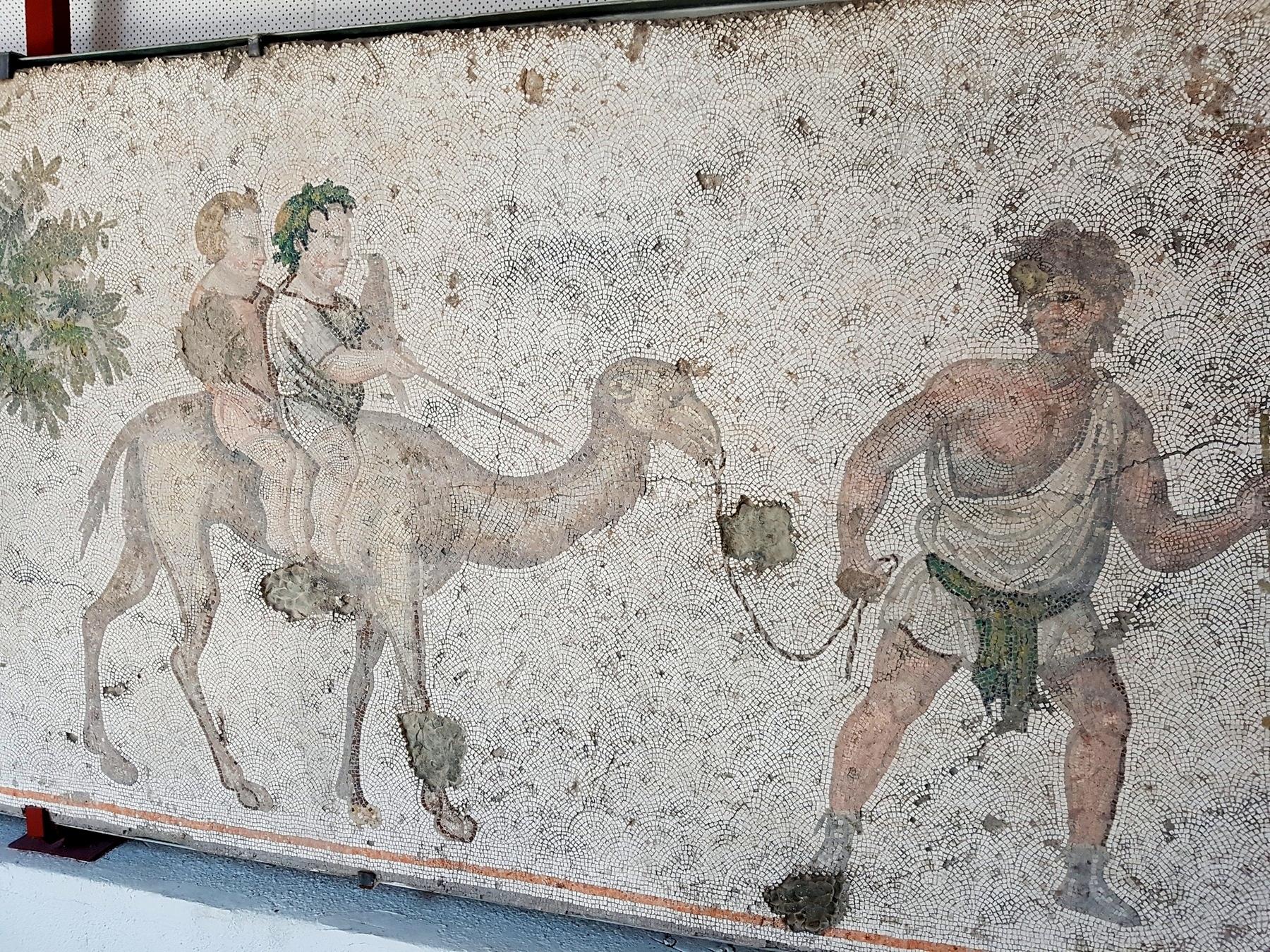Jazda na wielbłądzie