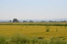 Amuq Plain seen from Alalakh