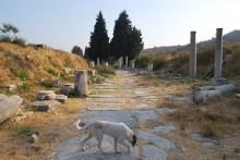Processional Road in Ephesus