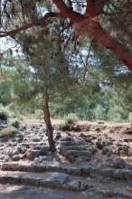 Panionium